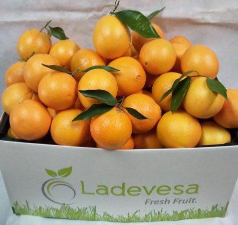 Naranjas de la región de Murcia