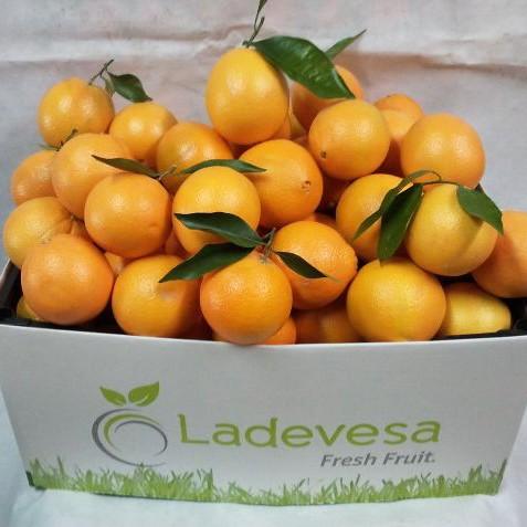 Lote de naranjas en www.frutasladevesa.com