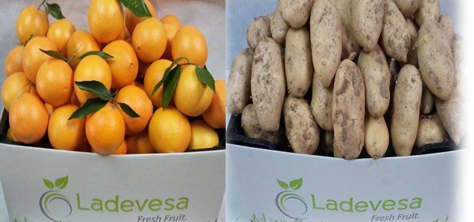 Oferton: Unidades limitadas. Lote naranjas de mesa + Lote de patatas nuevas del terreno
