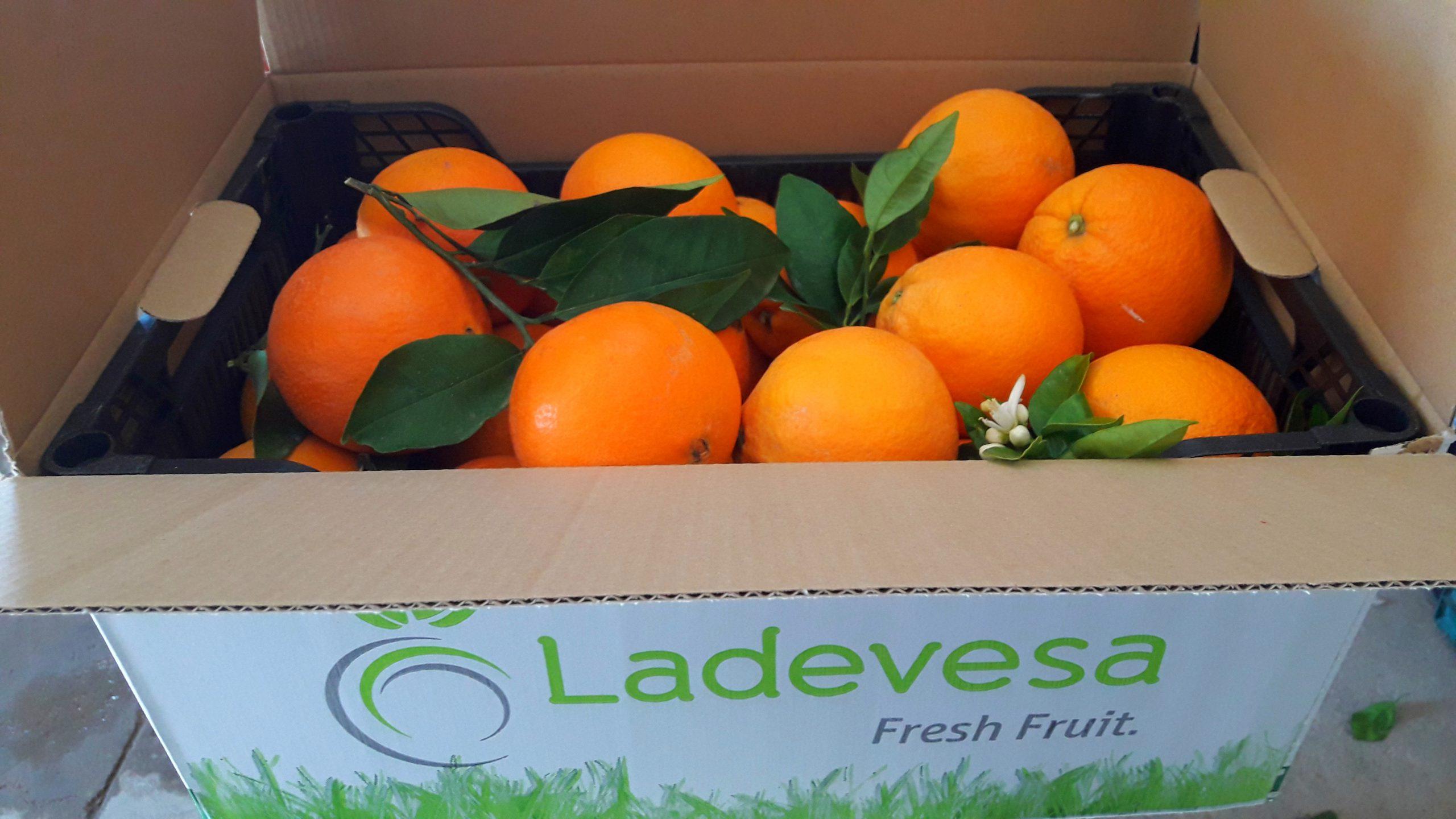Caja 15 kg naranjas de mesa huerta de Murcia
