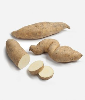 Boniato blanco ( autentico )