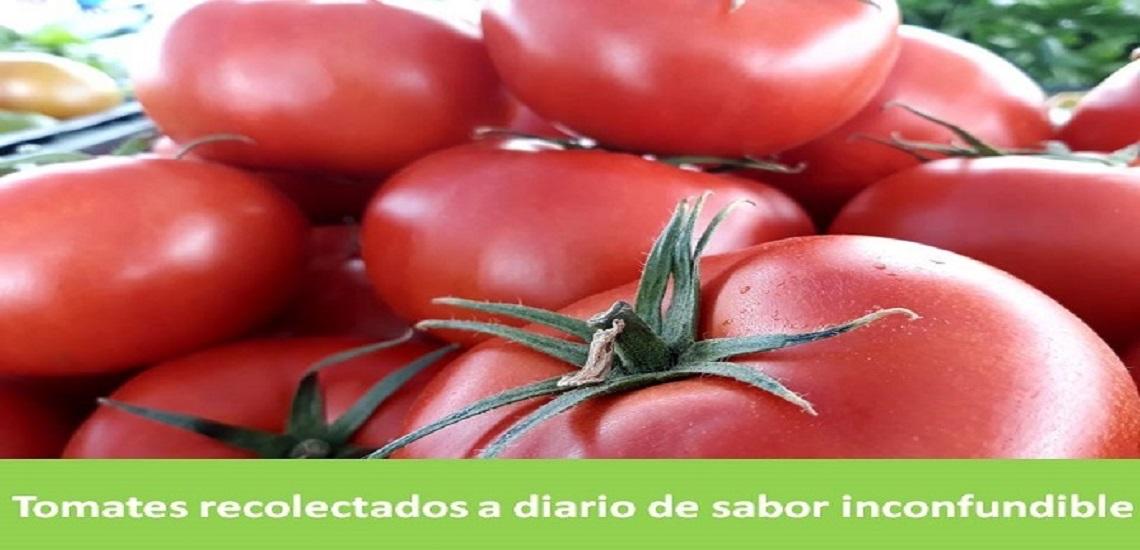 Tomate de Aguilas ( Murcia )