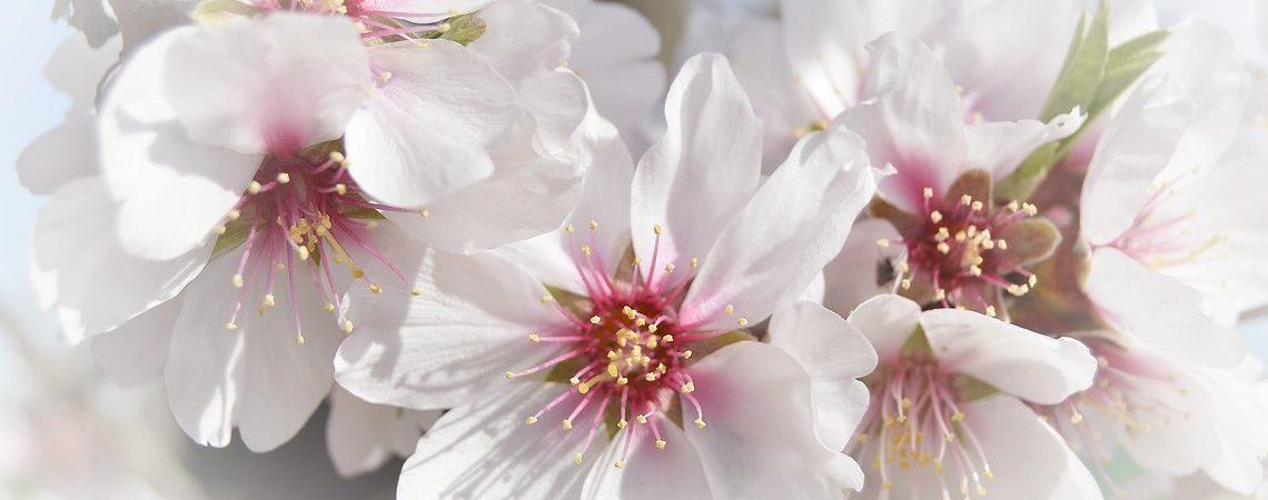 Comienza la floración en la region de Murcia, un espectáculo digno de contemplar.