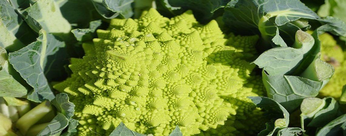 Entra el otoño, tiempo de verduras frescas de la huerta de Murcia.